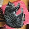 人の椅子を占領する猫ちゃん