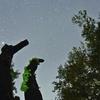 星空のツキヨタケ きのこフォトコンテスト『令和一年目に見たきのこ』大賞受賞作品