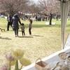 3/20(月祝)野川公園春の日まつり出店