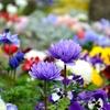 『花と緑のフェスティバル2019』~緑いっぱい花がほほえむ館林。つつじまつり・こいのぼりの里まつりと一緒に楽しめるイベント~