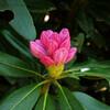神戸森林植物園、学習の森、再度公園。新緑、シャクナゲ、ツツジ、桜。