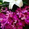 カウンターの花(11)