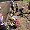保育園児20人とサツマイモ植えをしました