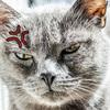 人間のクシャミに対する猫の反応