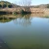 京田辺の野池