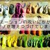 バリエーションの呪いにかかると靴が増え続ける。本当に持つべき靴とは?