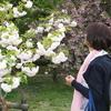 美人さんに古都のプチ観光案内してもらったよ〜② 京の都の御苑へ「御衣黄」を愛でたよ〜