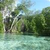 〜コスラエ島(ミクロネシア連邦) 旅ログ 〜 Day4 ウトウェ自然保護区のスノーケリング