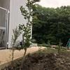 庭に植える予定の木を楽天で買いました