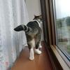 じめらないおネコさま。