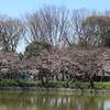 3月26日の名城公園