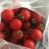 あま〜いミニトマト