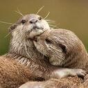 Otterlife's blog @Hong Kong ~香港の備忘録~