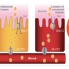 SGLT2 阻害剤に対する誤解