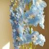 お花で心を癒そうとしたら優しい世界にも触れてしまった