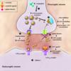 神経伝達物質と向精神薬