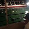【愛媛】日本三大鵜飼い 大洲肱川でうかいを楽しむ