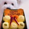 トイプー君お誕生日祝い