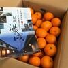 ふるさと納税で、和歌山県湯浅町から『みかん 10kg』が届きました!