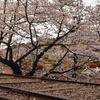レールと桜のアーチの組み合わせが美しい「蹴上インクライン」 (Kyoto, Keage incline)