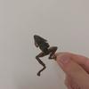 【昆虫食】20歳大学生がタイで虫を食べて気づいたこと