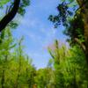 青葉の森を通り抜け 開けし空は夏の支度を