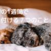 子犬の育て方|お家に来て1週間で気を付ける7つのこと