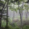 霧の中で熊