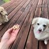 ブルーベリークッキーが一番人気!