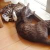 日なたの猫たち