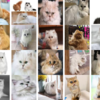 R/rvestを使って、Google画像検索で画像サムネイルを取得して、機械学習・ディープラーニング用の4次元アレイデータに変換するTips