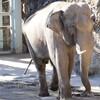 意外と知らない?動物の英語32選!【哺乳類編】タヌキは英語で何て言う?