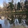 中央線国分寺の湧水「お鷹の道」