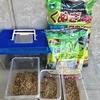 【カブトムシの幼虫】北海道にとっては、国内外来種!!