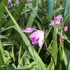 不思議なお花の正体と、花言葉。