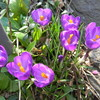 春のいろいろ