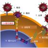 ヒト免疫不全ウイルス