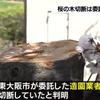 今年3月に東大阪市の公園の桜の木11本を切った犯人が判明!まさかの市が委託していた造園業者だった!!