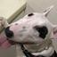 【子犬の躾|42】うちの子記念日を迎えました【子犬の成長は早いです】