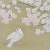 第三十一章 「文鳥と桜」2019・4