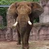 日本の動物園から象がいなくなる日!