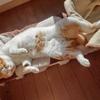 ネコの腎臓腫瘍
