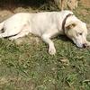 老犬の熱中症対策と予防!症状の早期発見で処置しよう!