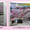 【ふくろうの花畑】斜面に咲く芝桜とふくろう石絵アートを見てきた!