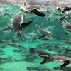 葛西臨海水族園に子どもと何度も行きたくなる3つの理由とは?