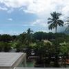 ケアンズ旅行記ブログ!コアラと朝ごはんのツアーが暑すぎた!