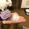 【ファーミネーター】犬猫用高級ブラシを使ってみた感想!