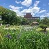 城北公園の花しょうぶ