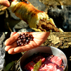 裏山の木の実入り牛肉の赤ワイン煮込み / ケバブドッグ / ジャガイモ丸焼き
