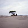 九十九里浜で撮ってきたんです
